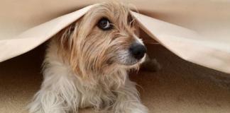 Max perro anuncio loteria